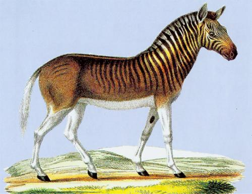 壁纸 动物 马 骑马 500_384